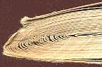Chełmiński Bolesław Masonerja w Polsce współczesnej Chelminski Boleslaw Masoneria wspolczesnej antysemityzm k013694 Muzeum Wolnego Słowa www.m-ws.pl/muzeum/